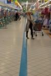 Ligne bleue Carrefour devenue anonyme à La Ville du Bois (Essonne)